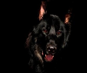 sennik Sen o czarnym psie