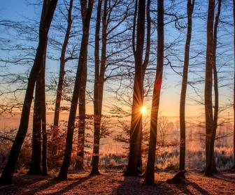 sennik Sen o drzewie