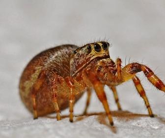 sennik Sen o pająku