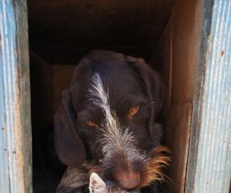 sennik Sen o psie i kocie